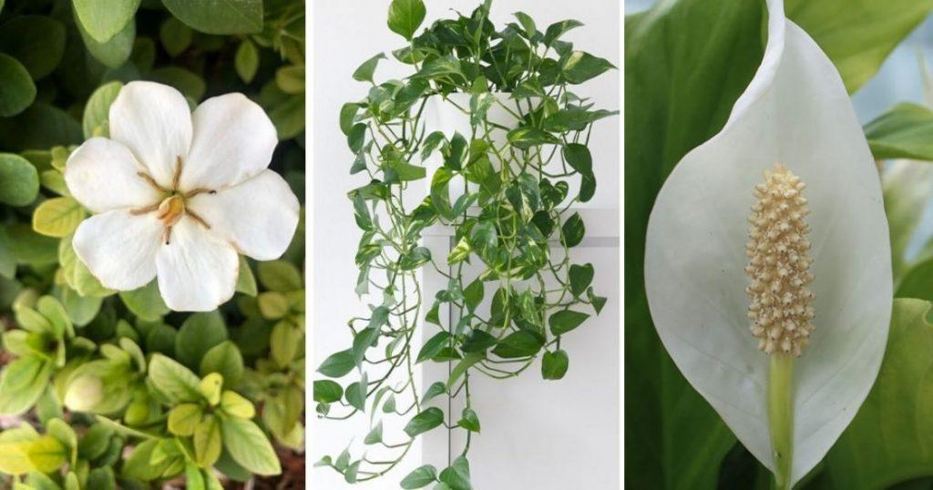 piante-camera-da-letto-1100x578